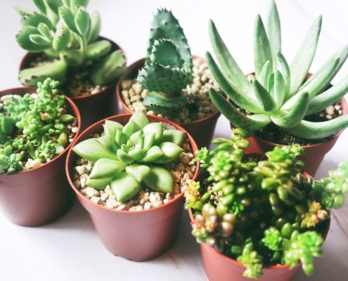 Mój ogród botaniczny - czy klimatyzacja wpływa na rośliny domowe?